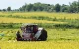 Lừa bán hơn 10ha lúa của người khác cho thương lái