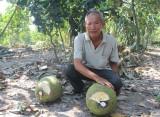 Tân Thạnh: Đột phá trong chuyển đổi cơ cấu cây trồng, vật nuôi trên đất lúa
