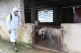 Kiến Tường chủ động ứng phó khẩn cấp với dịch tả lợn Châu Phi