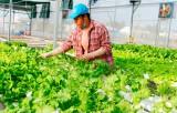 Liên kết sản xuất - xu thế phát triển nông nghiệp