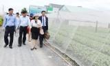 Chương trình Mỗi xã một sản phẩm - Đòn bẩy phát triển nông nghiệp