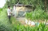 Bình Phong Thạnh tập trung giảm nghèo đa chiều