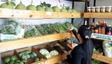 Người tiêu dùng vẫn thờ ơ với rau an toàn