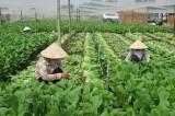 Doanh nghiệp, hợp tác xã ký kết 147 hợp đồng thương mại cung cấp nông sản