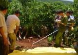 Bắt nữ nghi phạm tàn bạo chém chết 3 bà cháu, giấu xác trong vườn bơ