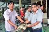 Thả cá thể rùa biển quý hiếm về tự nhiên