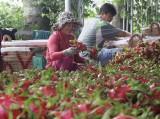 Long An tham gia xúc tiến thương mại tại Lào Cai
