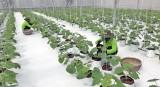 6 tháng cuối năm, Cần Giuộc cần kêu gọi đầu tư vào nông nghiệp ứng dụng công nghệ cao