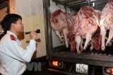 Thành phố Hồ Chí Minh phát hiện thêm ổ dịch tả lợn châu Phi