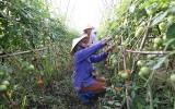 Góp phần bảo đảm vệ sinh an toàn thực phẩm