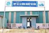 Hiệu quả sản xuất lúa theo VietGAP