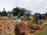 Đức Huệ xảy ra 40 ổ dịch tả heo Châu Phi