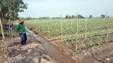 Tân Thạnh: 7 cơ sở vi phạm kinh doanh phân bón, thuốc trừ sâu giả