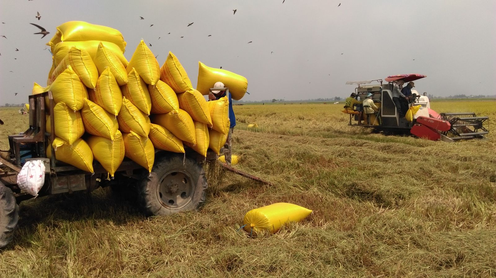 The consumption of agricultural products still faces many difficulties