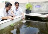Cần Đước: Duy trì đàn cá góp phần phục vụ phòng, chống sốt xuất huyết