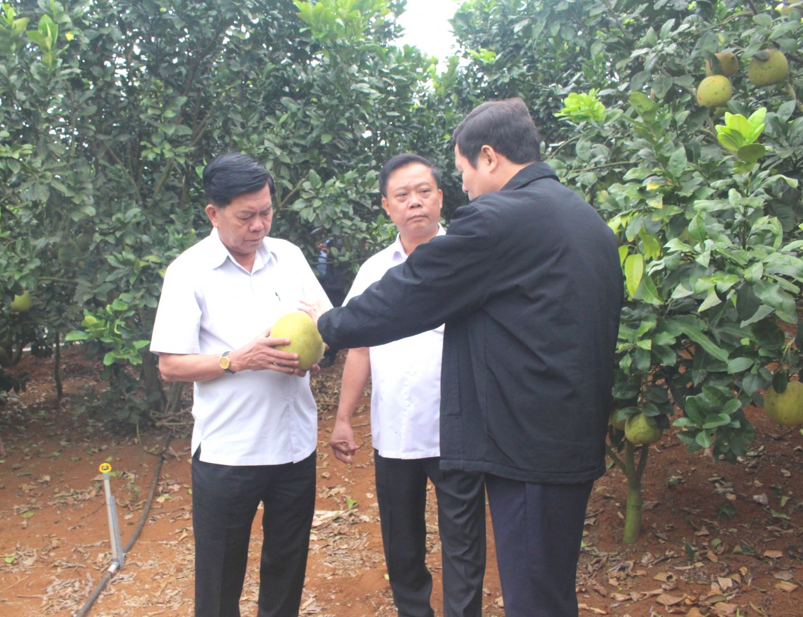 Long An Provincial People's Committee Chairman - Tran Van Can highly appreciates the high-tech production model in Son La province