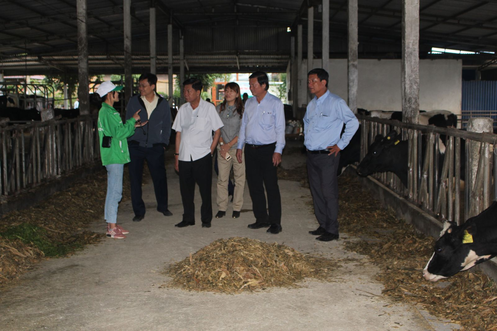 Long An mission visit a dairy cattle farm in Moc Chau district