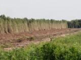 Long An chuyển đổi hơn 75 ha đất lâm nghiệp sang sử dụng mục đích khác