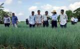 Liên kết sản xuất - nông dân hưởng lợi