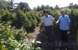 Thủ Thừa: Hiệu quả từ trồng mai vàng tại xã Tân Thành