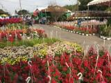 Long An: Trăm hoa khoe sắc ở chợ hoa Xuân