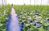 Long Sơn: Nông dân mạnh dạn chuyển đổi cơ cấu cây trồng