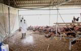 Bộ Nông nghiệp: Phát hiện sớm và tiêu hủy các ổ dịch cúm gia cầm