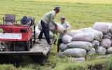 Vụ lúa Đông Xuân 2019-2020 - Nông dân trúng mùa, được giá