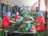 Sở Công Thương Long An bàn giải pháp quảng bá một số sản phẩm chủ yếu của tỉnh