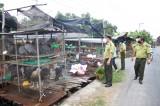 Long An: Tăng cường kiểm tra hoạt động kinh doanh động vật hoang dã
