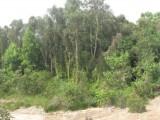 Thủ Thừa: Tăng cường phối hợp trong phòng, chống cháy rừng tại Khu Công nghệ Môi trường xanh