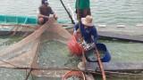 Bài 1: Một thời đua nhau đào ao ươm cá tra bột