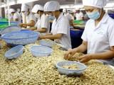 Hiệp định EVFTA: Nâng cao chuỗi giá trị gia tăng cho nông sản Việt
