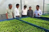 Mô hình vườn ươm cây giống tăng hiệu quả sản xuất