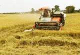 Đột phá xây dựng vùng lúa chất lượng cao