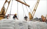"""Hiệp định EVFTA mở ra """"ô cửa nhỏ"""" cho xuất khẩu gạo vào EU"""
