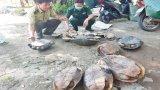 Đồn Biên phòng Sông Trăng phát hiện 4 đối tượng vận chuyển rùa trái phép