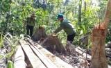 Khởi tố, bắt tạm giam các đối tượng phá rừng giáp ranh ở Phú Yên