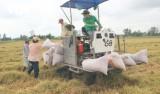Gạo vào EU sau EVFTA có giá hơn 1.000 USD/tấn