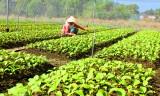 Long Trạch: Phát triển nông nghiệp gắn với công tác giảm nghèo