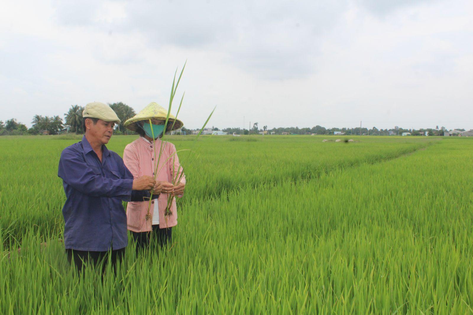 Vợ chồng bà Huỳnh Thị Sớm không chỉ nuôi con ăn học thành tài mà còn trở thành hộ khá giàu ở địa phương