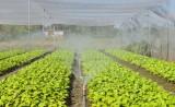 Đề án Phát triển nông nghiệp ứng dụng công nghệ cao đạt chỉ tiêu đề ra