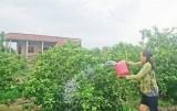Chuyển đổi khoảng 7.200ha đất trồng lúa sang cây trồng hàng năm và cây ăn quả