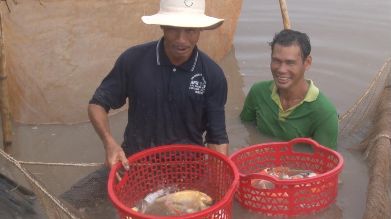Hoài Phương Ông Nguyễn Văn Hoàng (bên trái) thu hoạch cá Koi