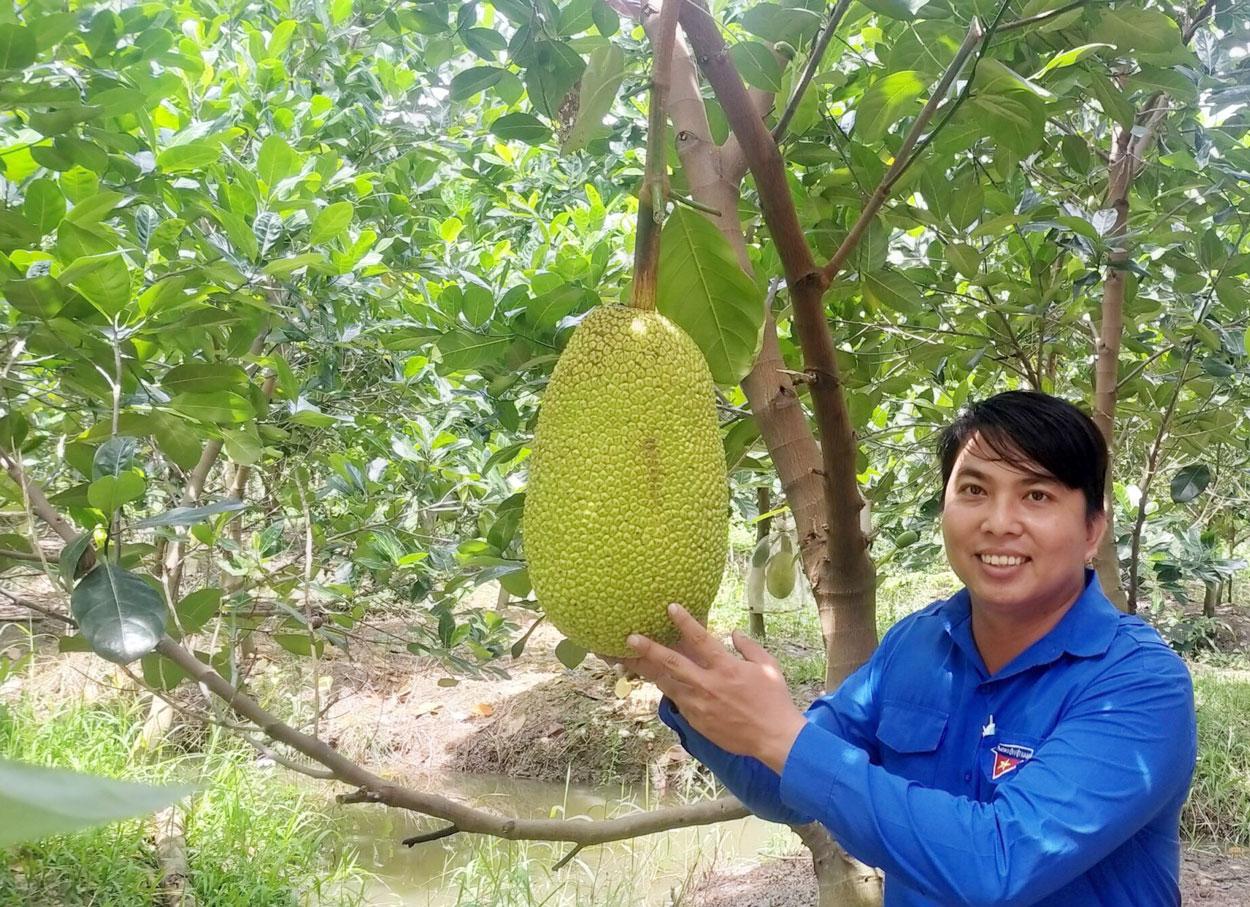 Mít Thái siêu sớm đang là loại cây trồng phổ biến, mang lại nguồn thu nhập đáng kể cho nhiều gia đình