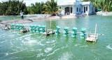 Sở Nông nghiệp và Phát triển nông thôn Long An làm việc với UBND Cần Đước về phát triển tôm nước lợ