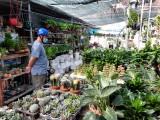 Thị trường hoa, kiểng tết vào mùa