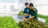 Vườn rau công nghệ cao trong doanh trại