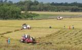 Giải thể những hợp tác xã nông nghiệp yếu kém, ngưng hoạt động lâu ngày