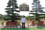 Cặp cây vạn niên tùng ở Đồng Tháp xác lập kỷ lục Việt Nam